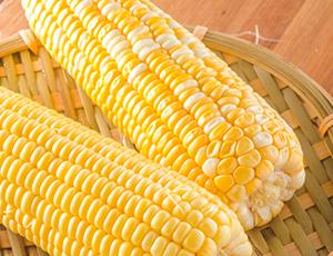 精选甜玉米